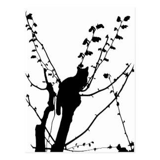 Gato del árbol postales