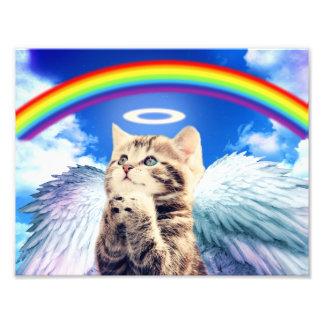gato del arco iris cojinete