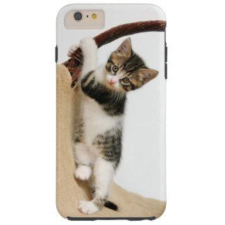 Gato del bebé, el subir lindo del gatito funda para iPhone 6 plus tough