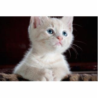 Gato del bebé esculturas fotograficas