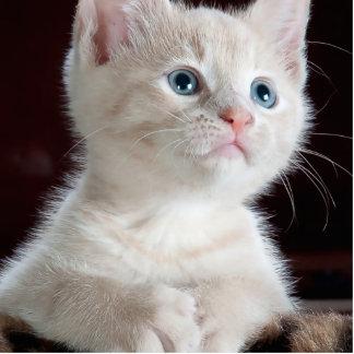 Gato del bebé escultura fotografica