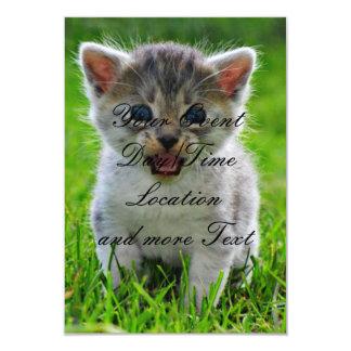 Gato del bebé anuncio