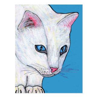 Gato del blanco de los ojos azules postales