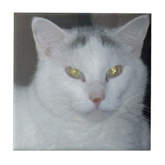 Gato del blanco de los pensamientos del gato azulejo cuadrado pequeño