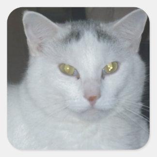 Gato del blanco de los pensamientos del gato pegatina cuadrada