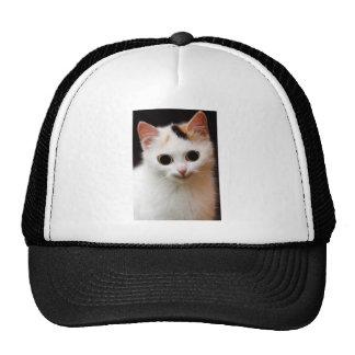 Gato del blanco del gatito gorra