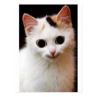 Gato del blanco del gatito tarjetas postales
