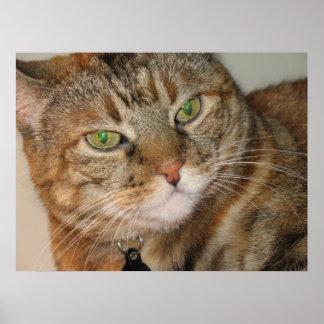 gato del canela poster