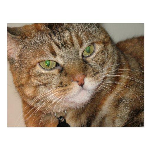 gato del canela tarjeta postal
