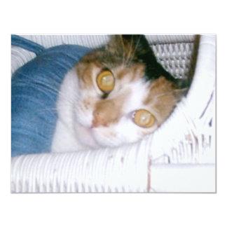 """Gato del Cassie-Calicó Invitación 4.25"""" X 5.5"""""""