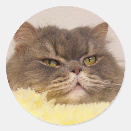 gato del doblez del escocés pegatina redonda