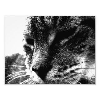 Gato del fantasma impresion fotografica