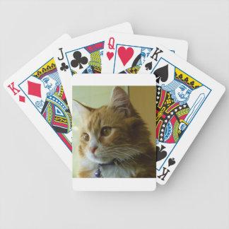 gato del gatito baraja
