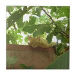 Gato del gatito de la selva tejas