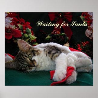 Gato del gatito del bebé del navidad, gatito obser poster