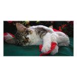 Gato del gatito del bebé del navidad, gatito obser tarjetas fotograficas