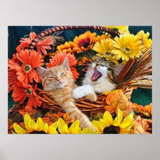 Gato del gatito del rugido, gatitos lindos en cest posters