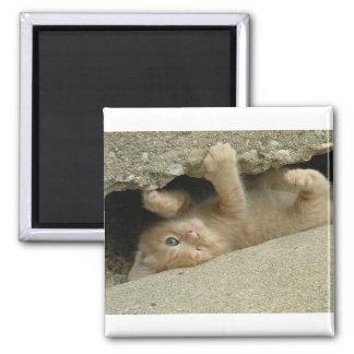 Gato del gatito del superhéroe imán de frigorífico