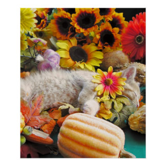 Gato del gatito del Tabby, calabaza colorida de la Posters
