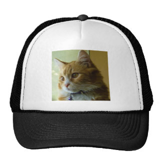 gato del gatito gorro de camionero