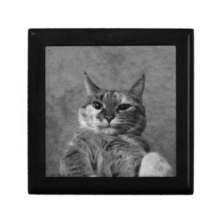 Gato del gatito joyero cuadrado pequeño