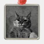 Gato del gatito ornamente de reyes
