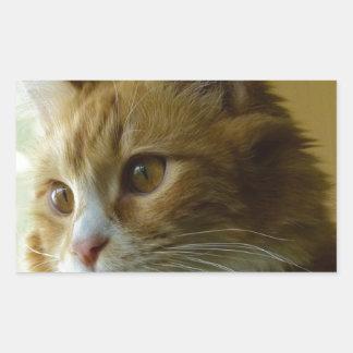 gato del gatito rectangular altavoces