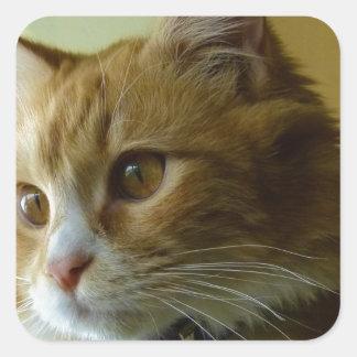 gato del gatito pegatina cuadrada