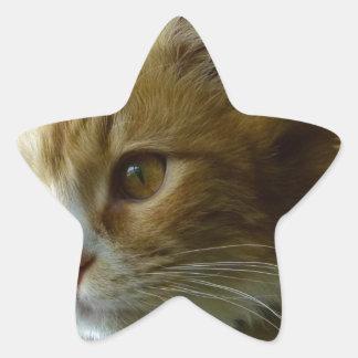 gato del gatito pegatina en forma de estrella