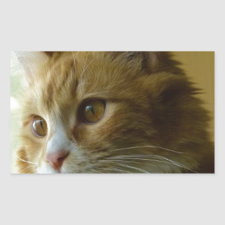 gato del gatito pegatina rectangular