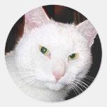 Gato del gatito pegatina redonda