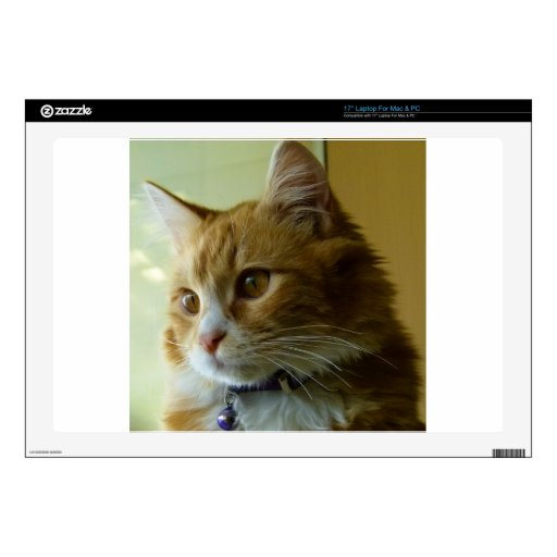 gato del gatito portátil calcomanías