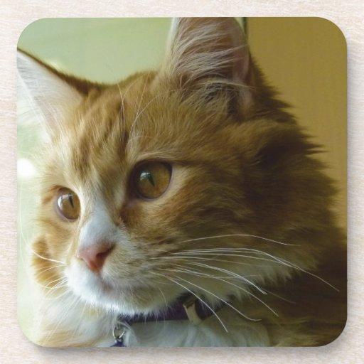gato del gatito posavaso