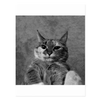Gato del gatito postales