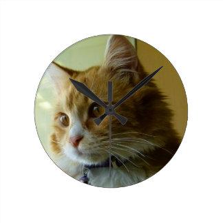 gato del gatito relojes de pared