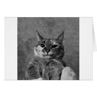 Gato del gatito tarjeta de felicitación