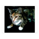 Gato del gatito tarjeta postal