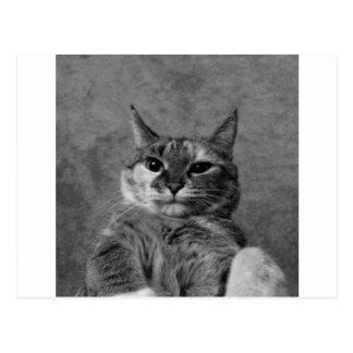 Gato del gatito tarjetas postales