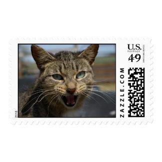 Gato del granero sellos