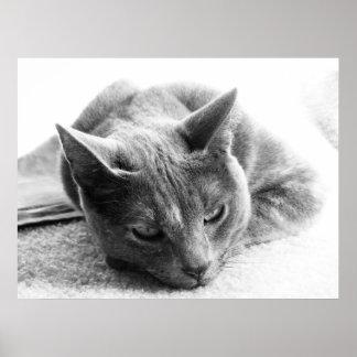 Gato del Grayscale Poster
