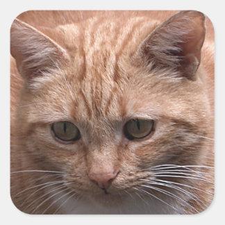 Gato del jengibre pegatina cuadrada