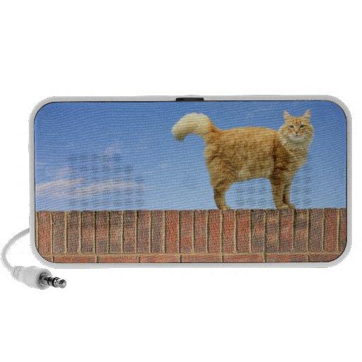 Gato del jengibre que se coloca en la pared de altavoz de viajar
