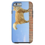 Gato del jengibre que se coloca en la pared de funda de iPhone 6 tough