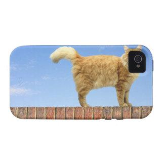 Gato del jengibre que se coloca en la pared de lad Case-Mate iPhone 4 funda