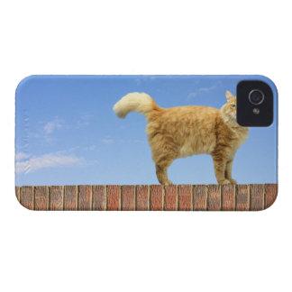 Gato del jengibre que se coloca en la pared de lad Case-Mate iPhone 4 fundas