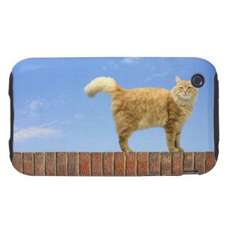 Gato del jengibre que se coloca en la pared de lad iPhone 3 tough protectores