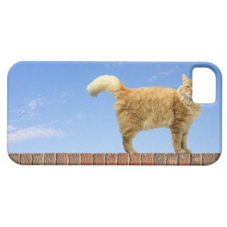 Gato del jengibre que se coloca en la pared de lad iPhone 5 carcasas
