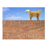 Gato del jengibre que se coloca en la pared de postal