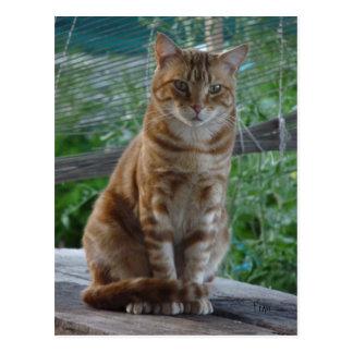 gato del jengibre tarjetas postales