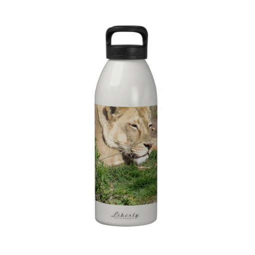 Gato del león el dormir botellas de beber